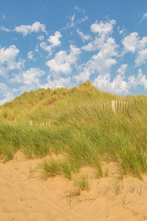 Marram Grass on Sand Dunes. Marram grass covered sand dunes at Formby in Merseyside, on a sunny summers day royalty free stock images