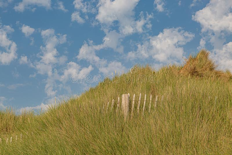 Marram Grass on Sand Dunes. Marram grass covered sand dunes at Formby in Merseyside, on a sunny summers day royalty free stock image