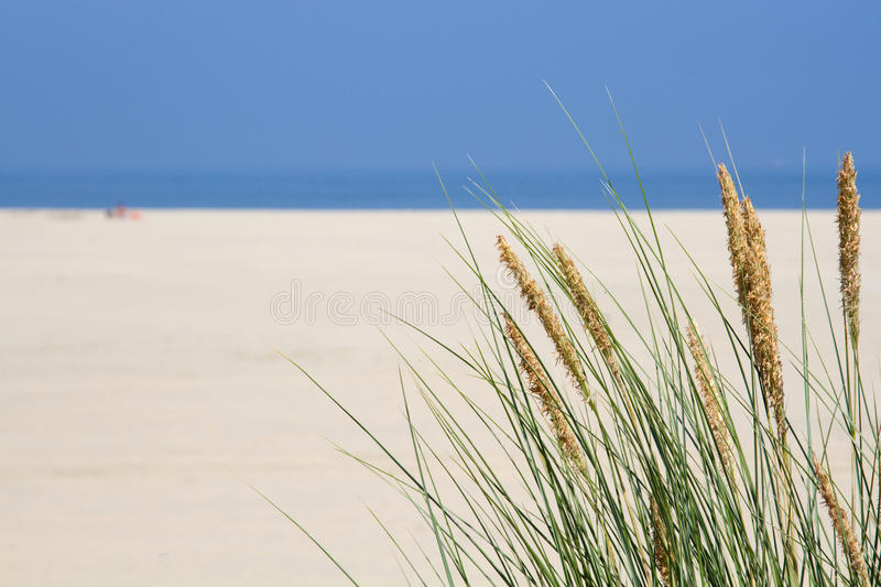 Marram grass at the seaside stock images
