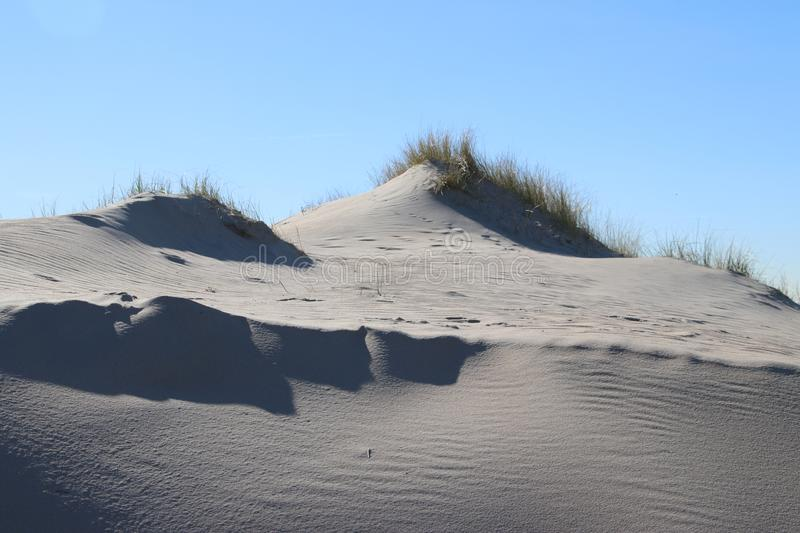 Marram grass in the sun at the sand dunes along the north sea coast in the Netherlands. stock image