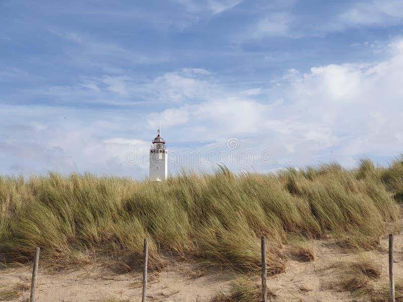 Marramgras in de duinen bij Noordwijk in Nederland aan de Noordzeekust met witte vuurtoren op de achtergrond royalty-vrije stock foto's