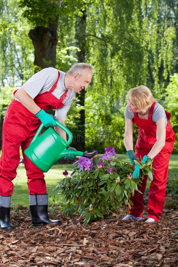 Married couple watering and caring about flowers royalty free stock image