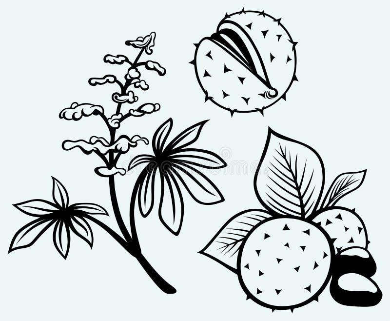 Marron d'Inde, fleurs, feuille et graines illustration de vecteur