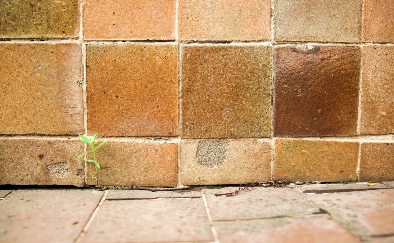 Marrone del fondo della parete delle mattonelle fotografia stock