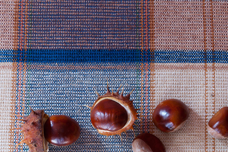 Marrons d'Inde sur un fond de tissu images stock