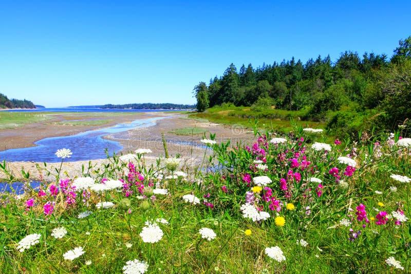 Marrowstone海岛 奥林匹克半岛 状态华盛顿 免版税库存图片