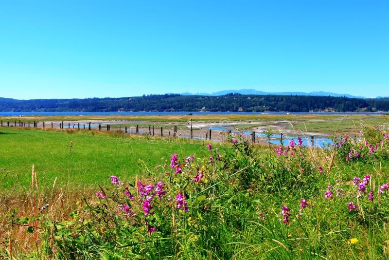 Marrowstone island. Olympic Peninsula. Washington State. royalty free stock photo