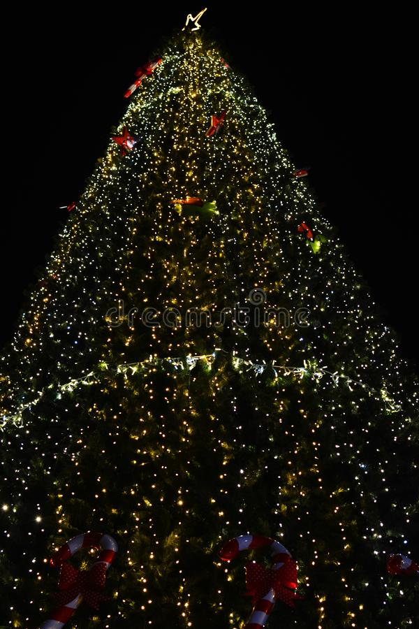 Marry Christmas and Happy New Year. Christmas tree at night. Dark background. Light. Lights. royalty free stock photos