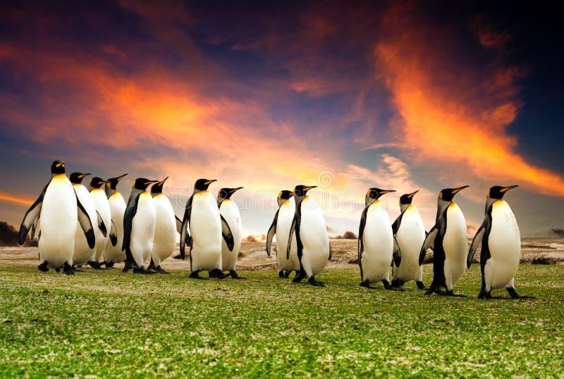 Mars des pingouins images libres de droits