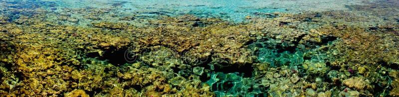 Marsa alam Korallenriff stockfotos