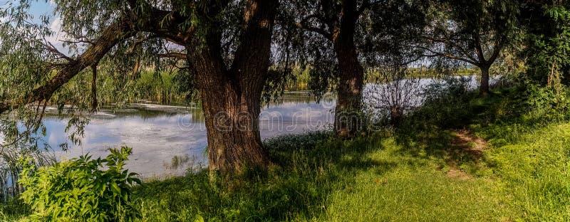 Marschlandbeschaffenheit von Louisiana US-Naturparks lizenzfreie stockbilder