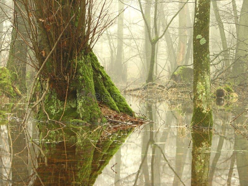 Download Marsh stock image. Image of background, river, plants - 25908251
