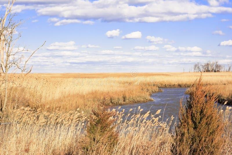 Marsh royalty free stock photo