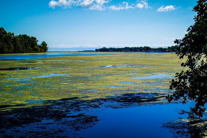 marsh arkivfoton