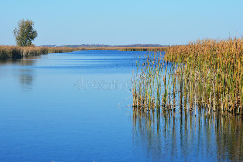 marsh royaltyfri bild