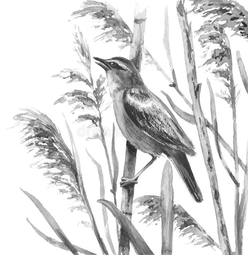 Marsh Bird Sings nos juncos ilustração stock