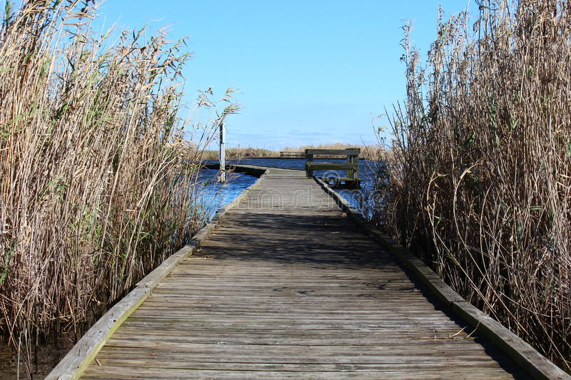 Marsh boardwalk between grass stock images
