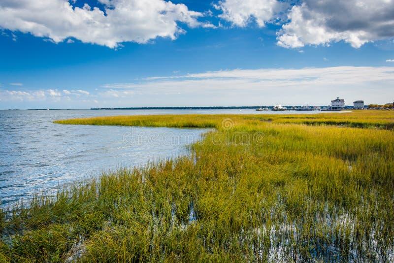 Marsh in Charleston, South Carolina. royalty free stock photos