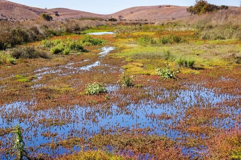 Marsh covered in vegetation, Coyote Hills Regional Park, East San Francisco Bay Area, Fremont, California royalty free stock photography
