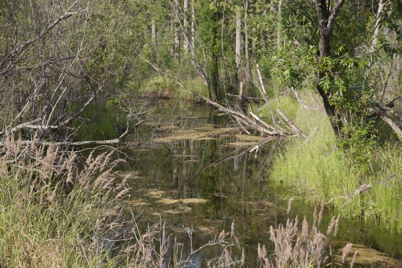 Download Marsh Creek stock image. Image of flats, palmer, marsh - 57009549