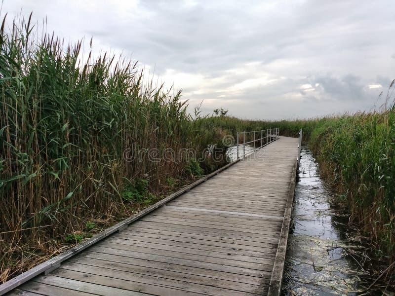 Marsh Discovery Trail, Kingsland-Kreek, Hackensack-Rivier, Meadowlands, NJ, de V.S. royalty-vrije stock foto