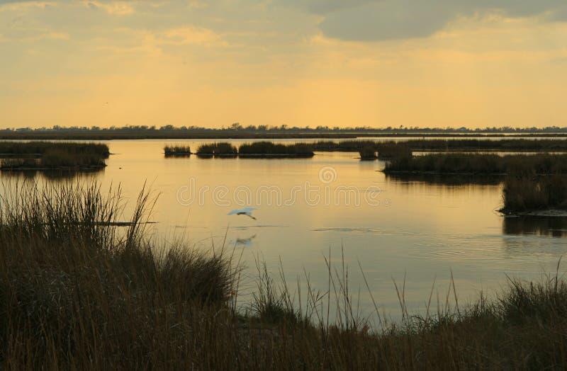 Marsh at dusk royalty free stock photo