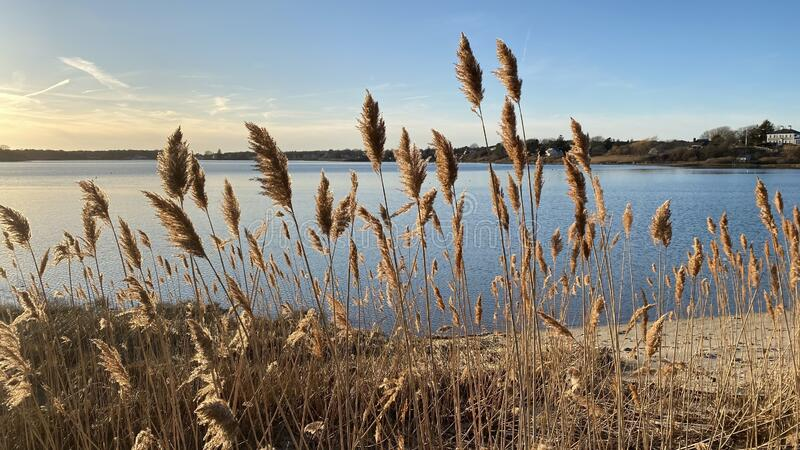 Marsh Grass on Cape Cod royalty free stock images