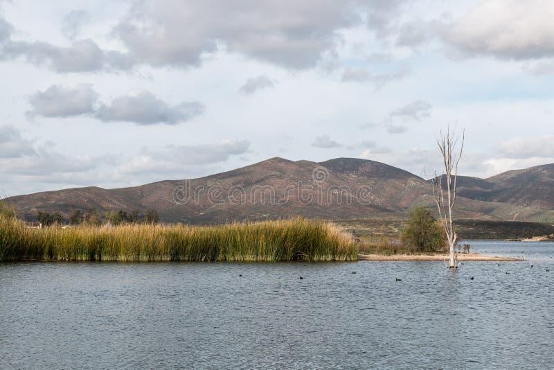 Marsh Grass in Meer met Achtergrond van Bergen royalty-vrije stock foto's
