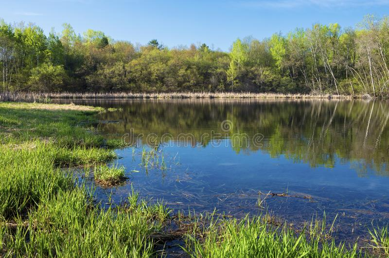 Marsh Grasses and Woodlands Surrounding Salem Hills Pond. Marsh grasses and woodlands surrounding pond with reflections in salem hills park inver grove heights royalty free stock image
