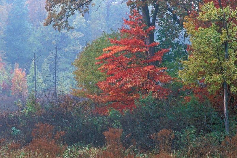 marsh jesienią zdjęcie stock