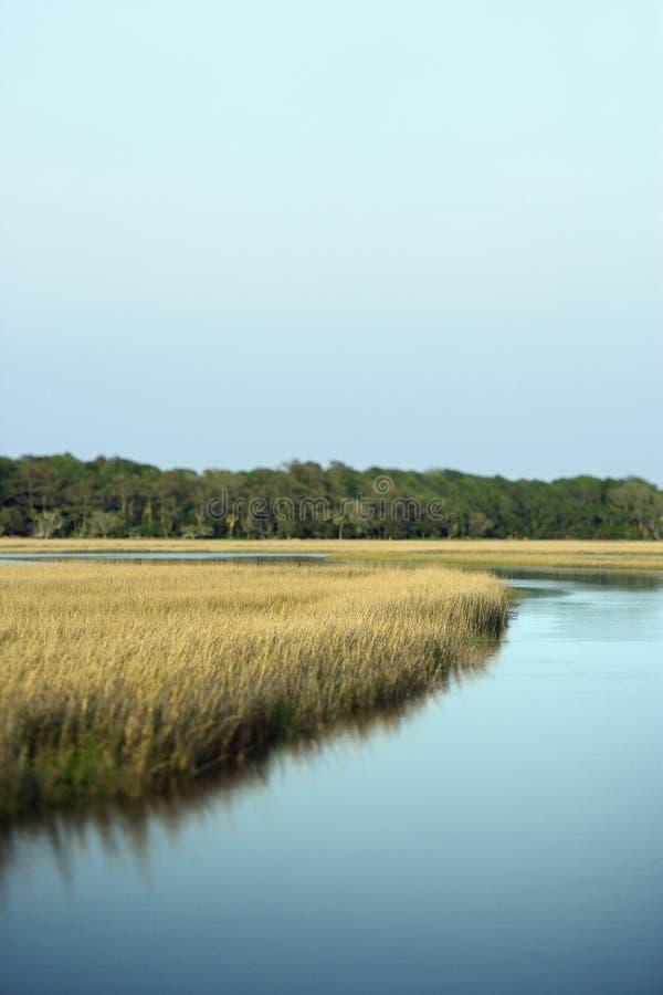 marsh krajobrazu zdjęcie royalty free