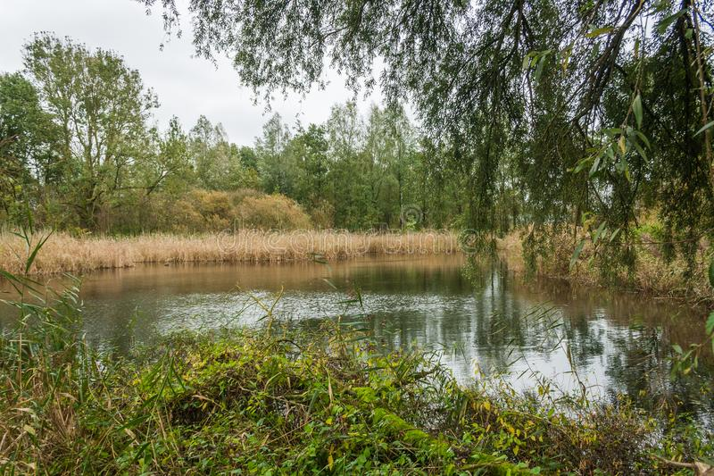 Marsh lake in the Beusebos stock images