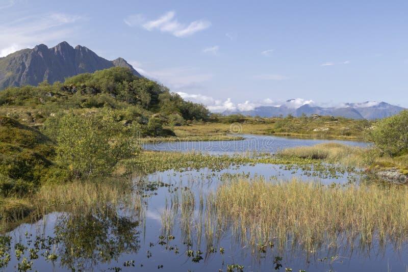 Marsh Land auf Vagan, Lofoten Inseln, Norwegen, Skandinavien stockbild