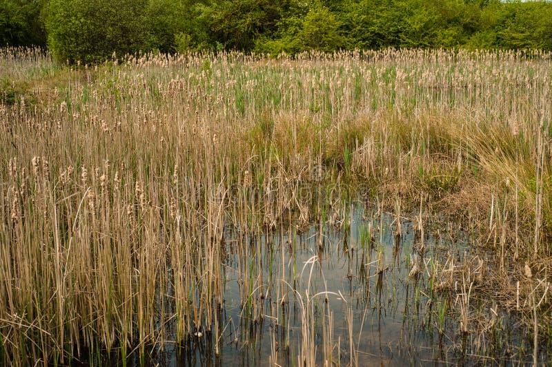 Marsh Land Rushmere-Park lizenzfreies stockbild