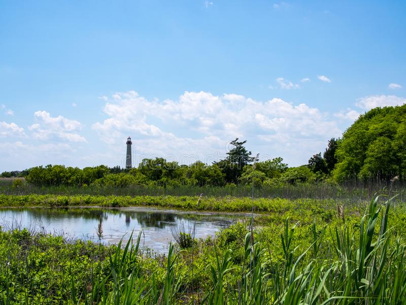 Marsh Landscape, farol de Cape May, New-jersey fotos de stock