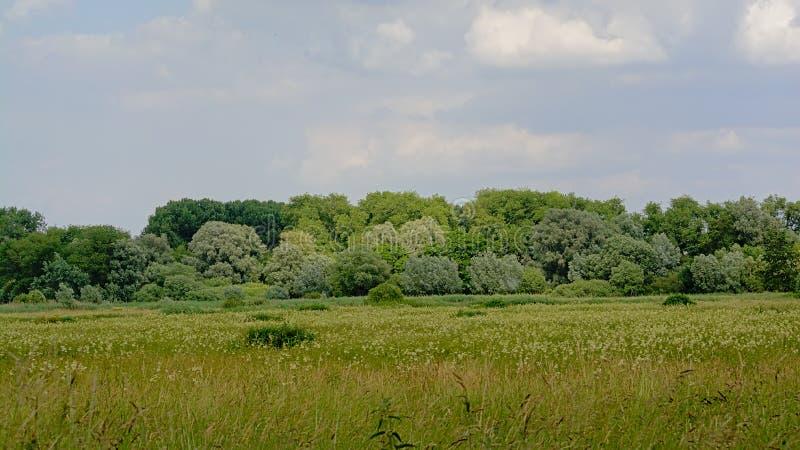 Wetlands in Kalkense Meersen nature reserve, Flanders, Belgium. Marsh landscape with field with reed and trees in Kalkense Meersen nature reserve, Flanders stock image