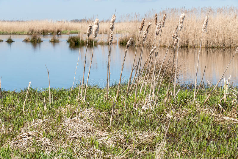 Marsh Landscape. stock image