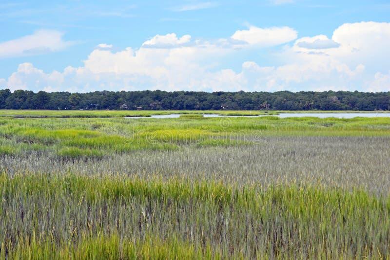 Marsh landscape stock photography