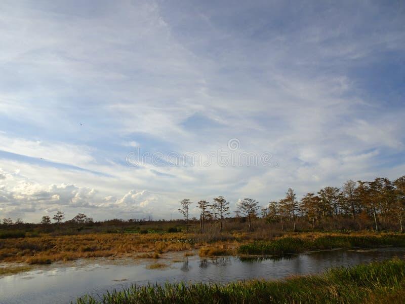 Marsh Landscapes immagini stock libere da diritti