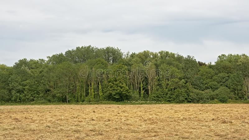 MArsh lanscape withh meadow and trees in bourgoyen nature rserve, Ghent, Belgium stock photo