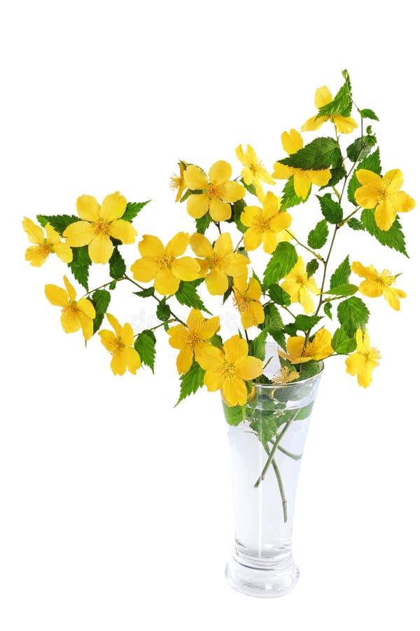 Marsh Marigold gulnar vildblommor i vasen som isoleras på vitbac royaltyfria bilder