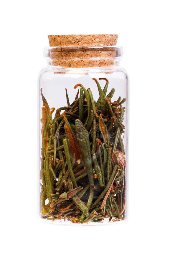 Marsh Northern Labrador Tea Ledum palustre in a bottle. royalty free stock image