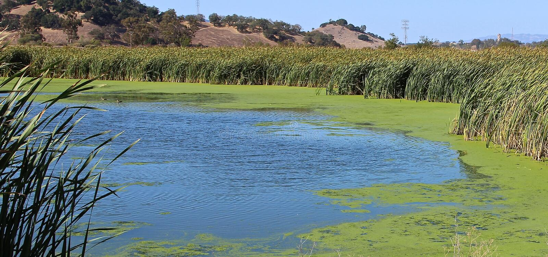 Marsh Ponds em San Rafael, Califórnia imagem de stock
