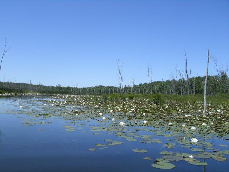 Marsh Scene Michigan stock afbeeldingen