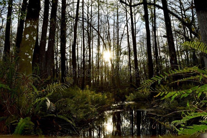 Marsh Sunset imagem de stock royalty free