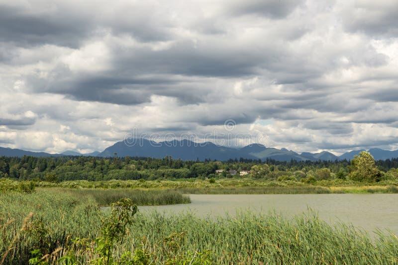 Marsh By Vancouver stock fotografie