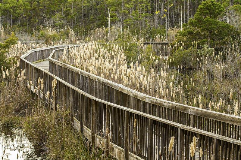 Marsh Walkway stock fotografie