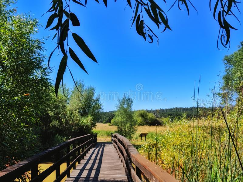Marsh weathered Wooden Walking bridge. Golden fields. Intense blue sky. Foreground, disruption, leaves, hanging, interrupted, marshwaters, reeds, wild, shadow stock photos