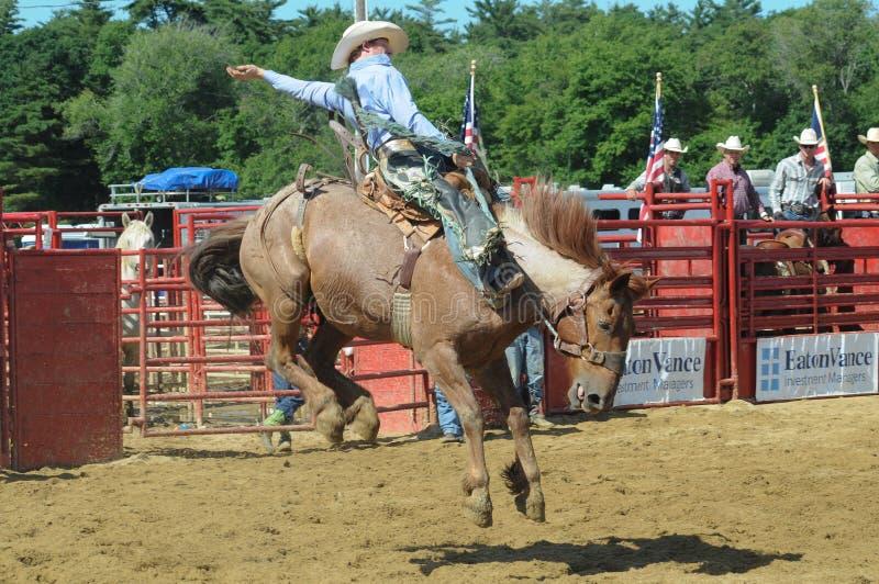 Marshfield Massachusetts - Juni 24, 2012: En rodeocowboy som rider en sparka bakut vildhäst royaltyfri foto