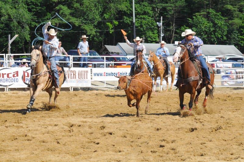 Marshfield, Massachusetts - Juni 24, 2012: Twee Rodeocowboys die aan Kabel een het Lopen Jonge os proberen royalty-vrije stock foto